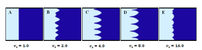 Interface Morphology Under Different Pulling Speed, Which Equals to the Freezing Speed Vs at Equilibrium: